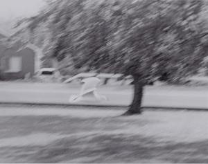 A controlled blur shot of a seagull flying on campus.