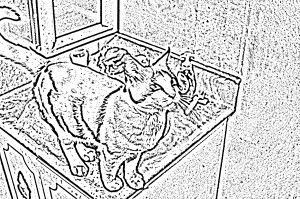 Line drawing of a cat.